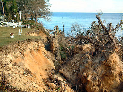 Slope undercut by floodwaters overtopping 2-3 ft stone wall and undermining mature trees. Gibson I., Chesapeake Bay, Anne Arundel Co.